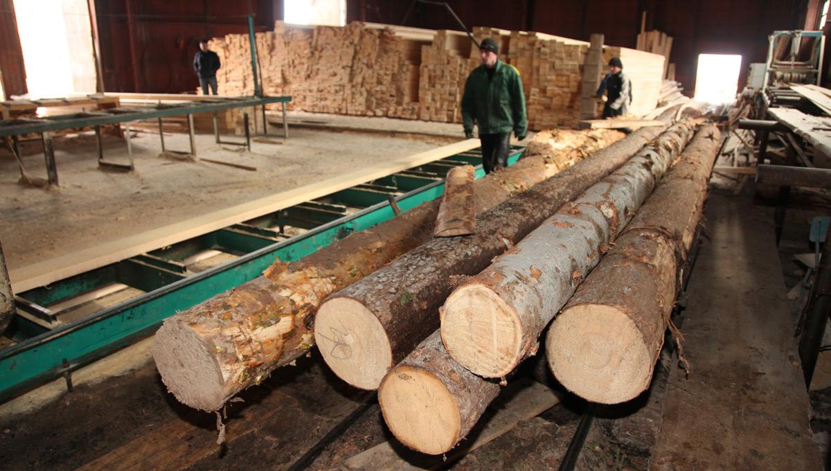 Вторую лесную биржу организуют вПерми