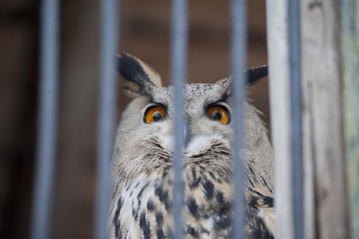 Отставание возведения нового зоопарка вПерми наконец-то уменьшилось