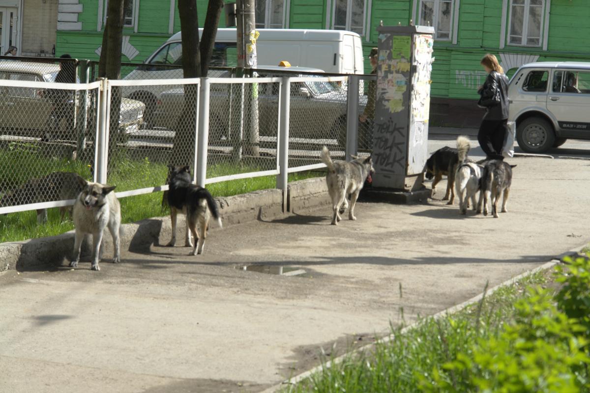 ВПерми увеличили объем средств наотлов бездомных собак